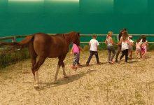 Konji in jahanje – Brezovica pri Ljubljani